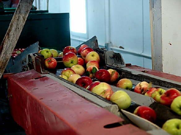 Apple Production Line