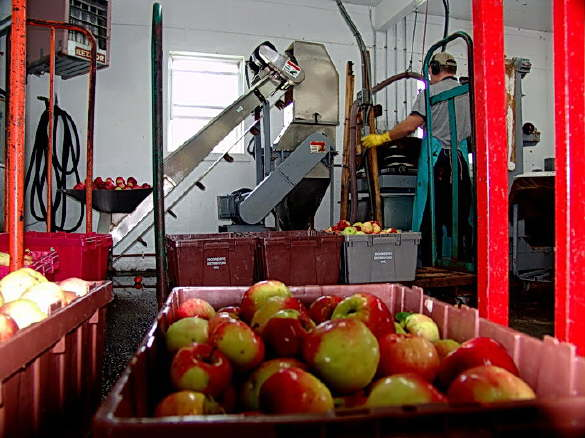 Apple Production