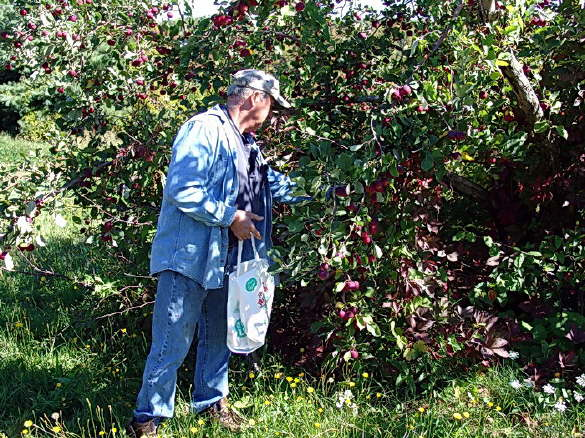 Maine Pick Your Own Apples