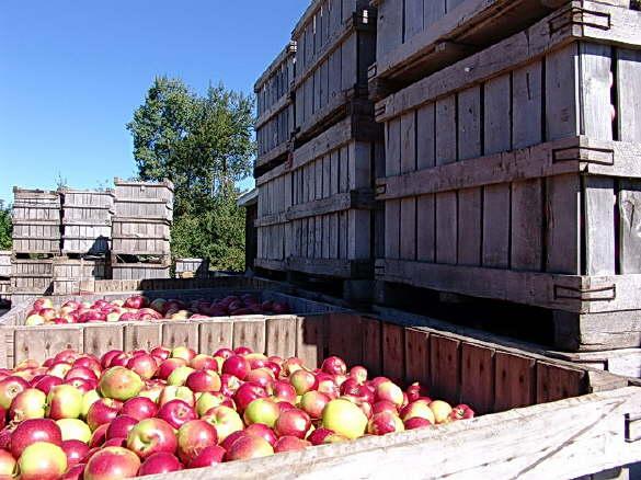 Apple Shipment