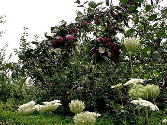 Beautiful Orchard
