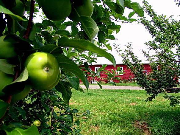 The Apple Farm in Fairfield, Maine