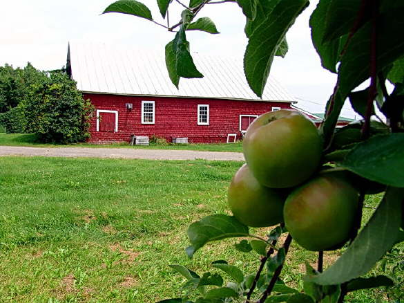 The Red Barn at the Apple Farm